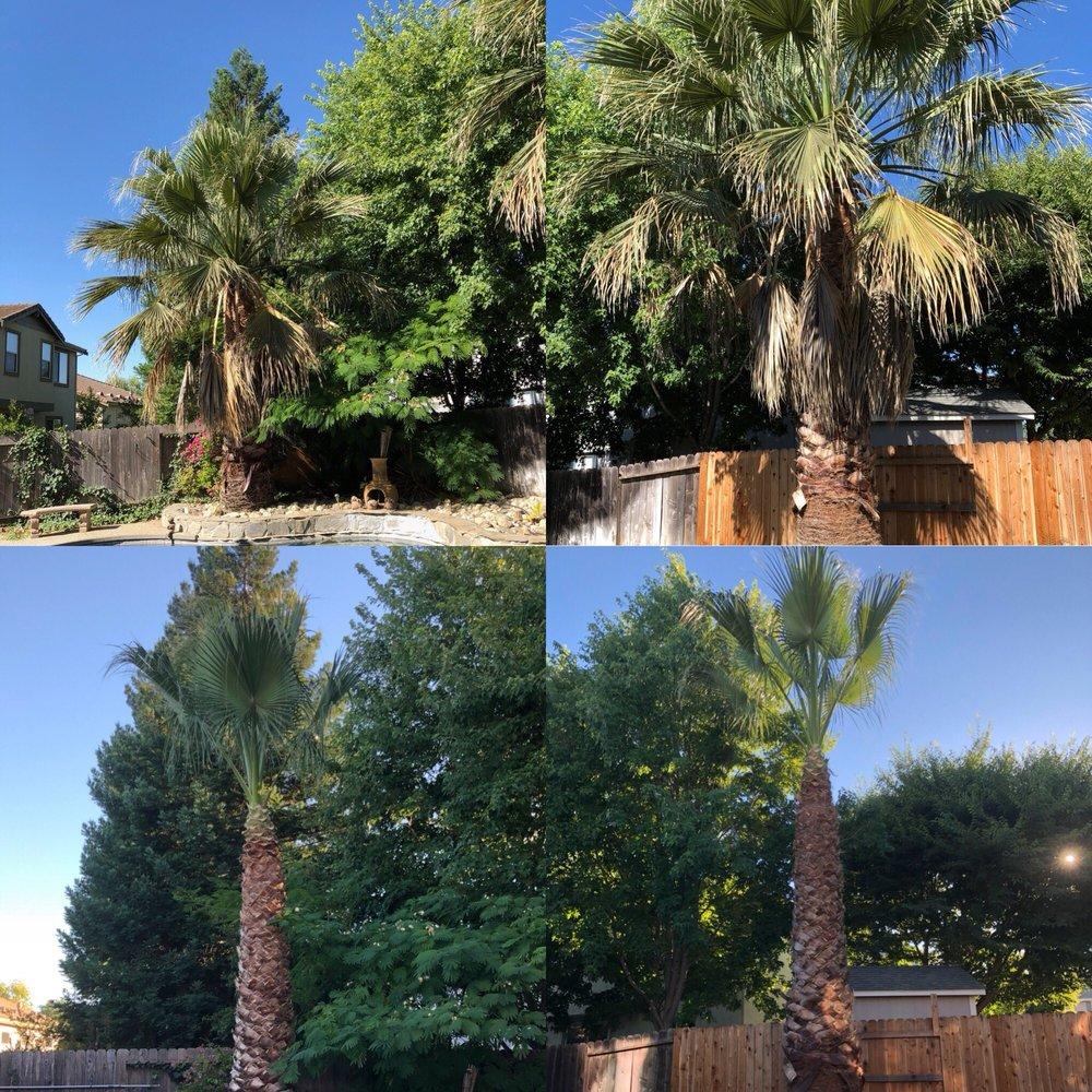 Nestor Hernandez Tree Care: 426 Anderson Ave, Winters, CA