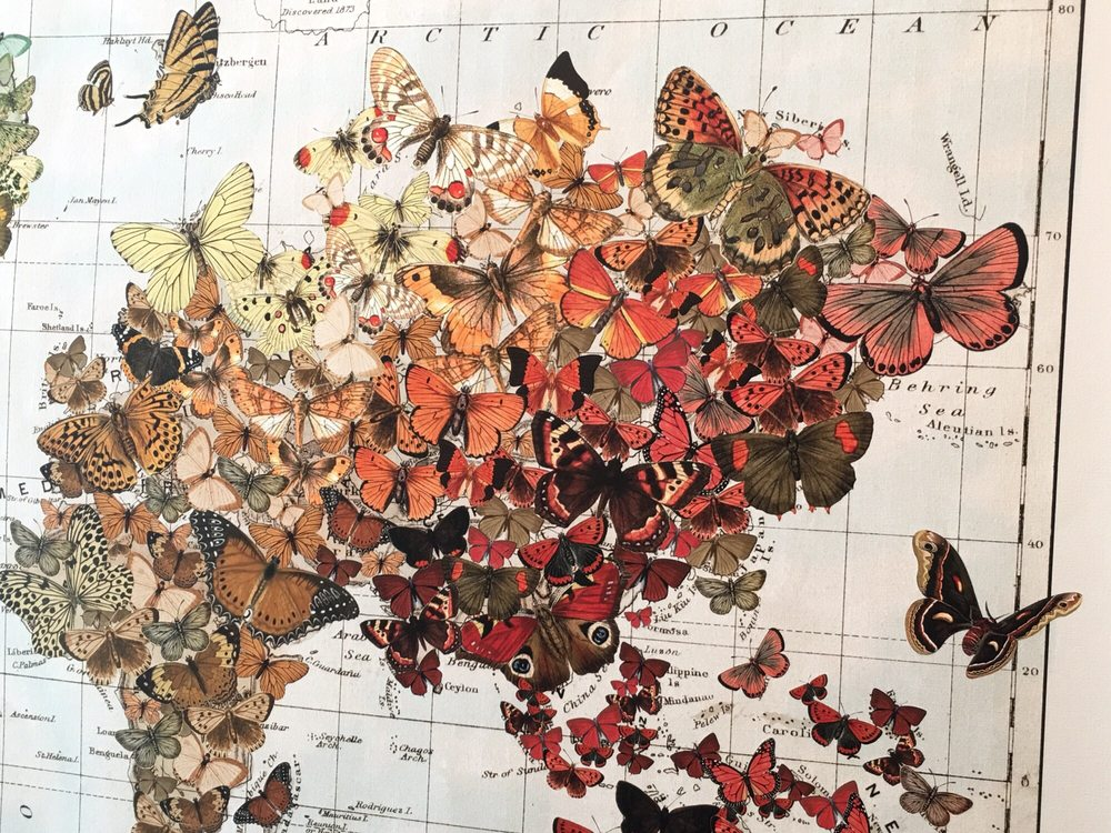 photo of wendy gold design san anselmo ca united states butterfly world