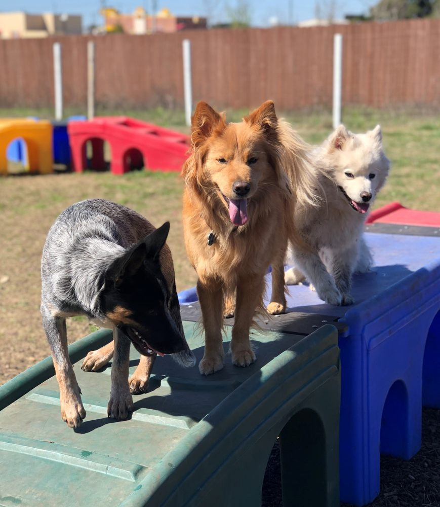 Action Pack Dog Center - Liberty Hill: 13150 W Hwy 29, Liberty Hill, TX