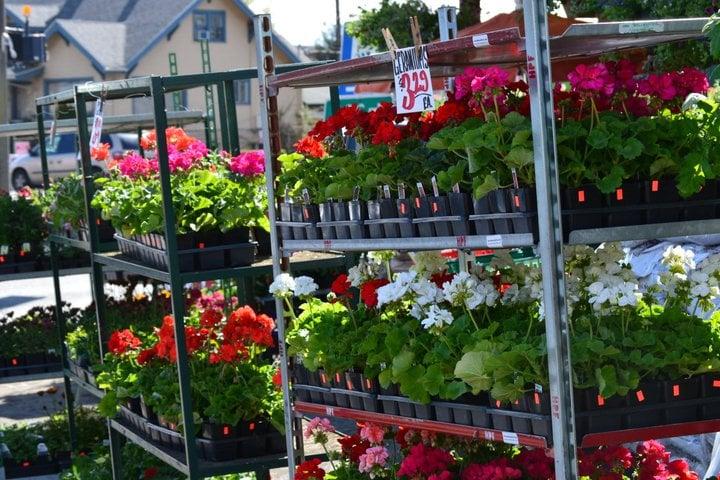 Country Farms - Everett - 17 Photos & 12 Reviews - Fruits & Veggies ...