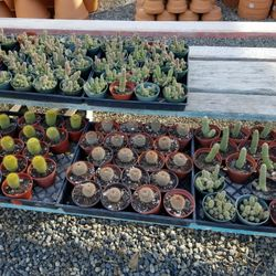 Photo Of Memo S Nursery Chino Ca United States Cute Cacti And Succulents