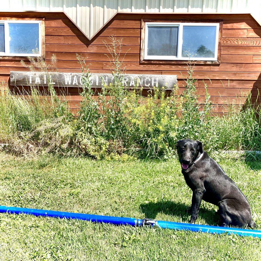 Tail Waggin' Ranch: 3108 Linney Rd, Bozeman, MT