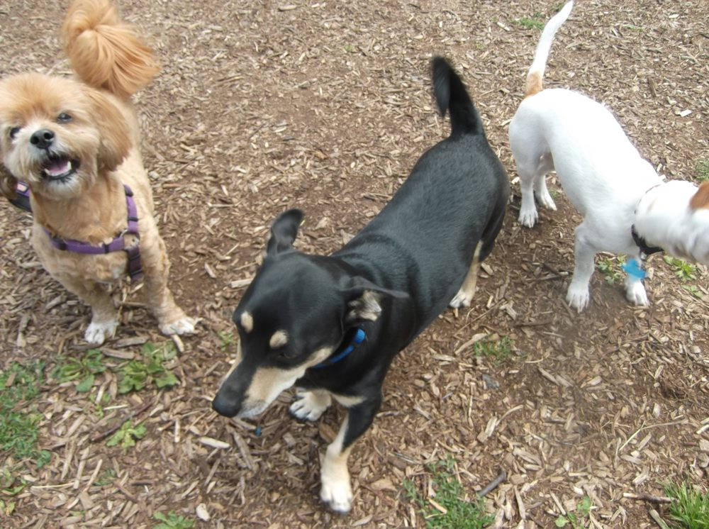 Adventure Dog Ranch: 14914 2nd Ave NE, Marysville, WA