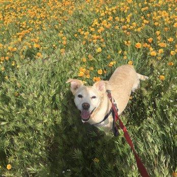 Lucky Dog Animal Rescue - 5159 Lee Hwy, Arlington, VA - 2019