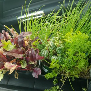 Shorty S Garden Center 2019 All You Need To Know Before