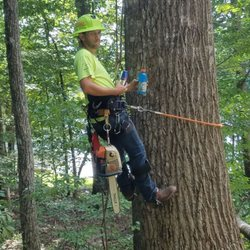 Hsc Tree Services Tree Services 1616 S Fayetteville St