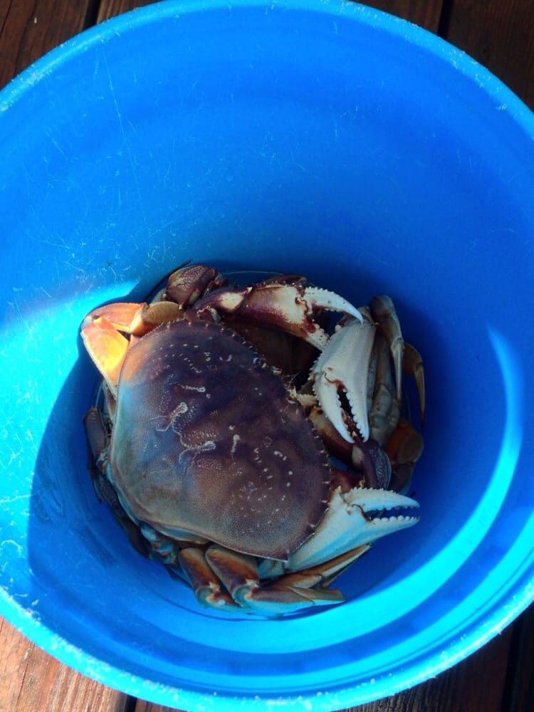 Bounder s crab seafood markets 16030 lower harbor rd for Where can i buy fresh fish near me