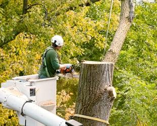 Future Tree Services: 412 W Main St, Gardner, IL