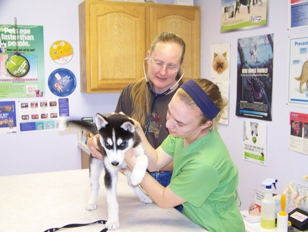 Animal Health Services: 301 Pleasant Ave, Atwater, MN