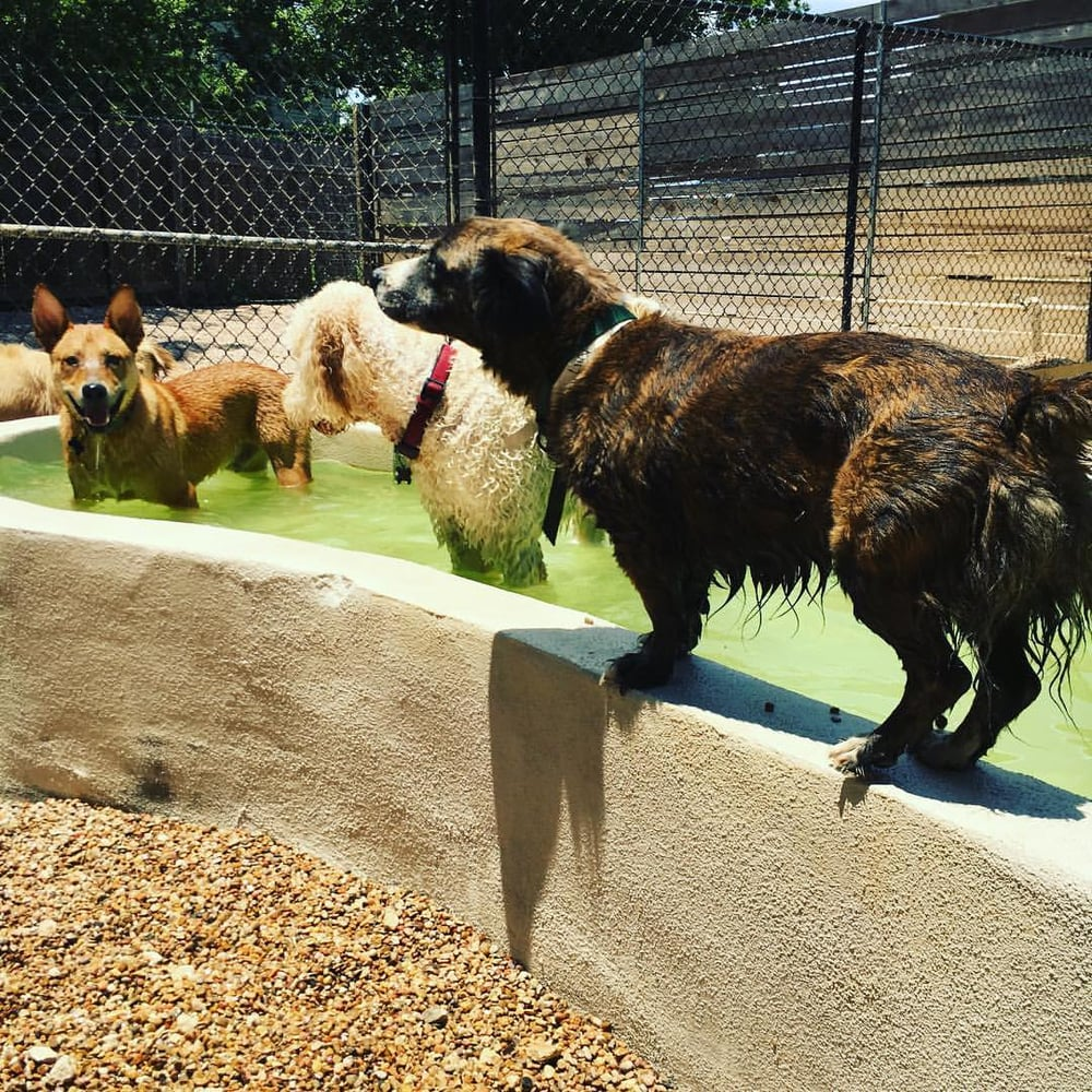 Shady acres pet ranch 36 photos 56 reviews kennels for Dog boarding places near me