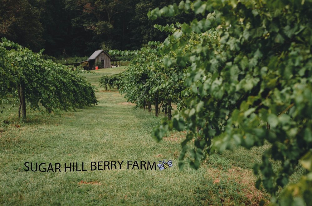 Sugar Hill Berry Farm: 6646 Jake Kemp Rd, Murrayville, GA