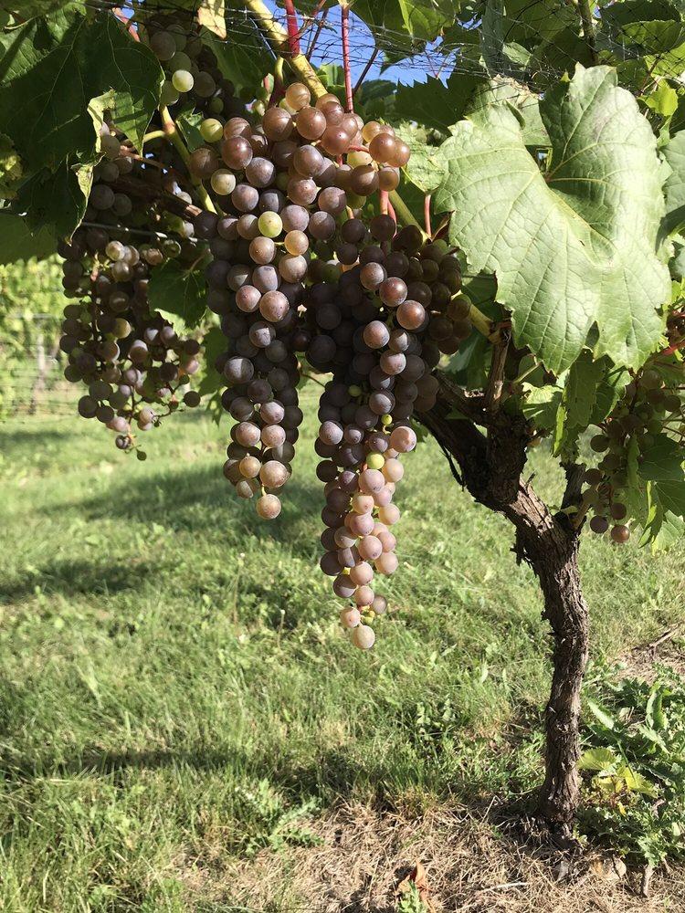 Red Trail Vineyard: 3510 142nd Ave SE, Buffalo, ND