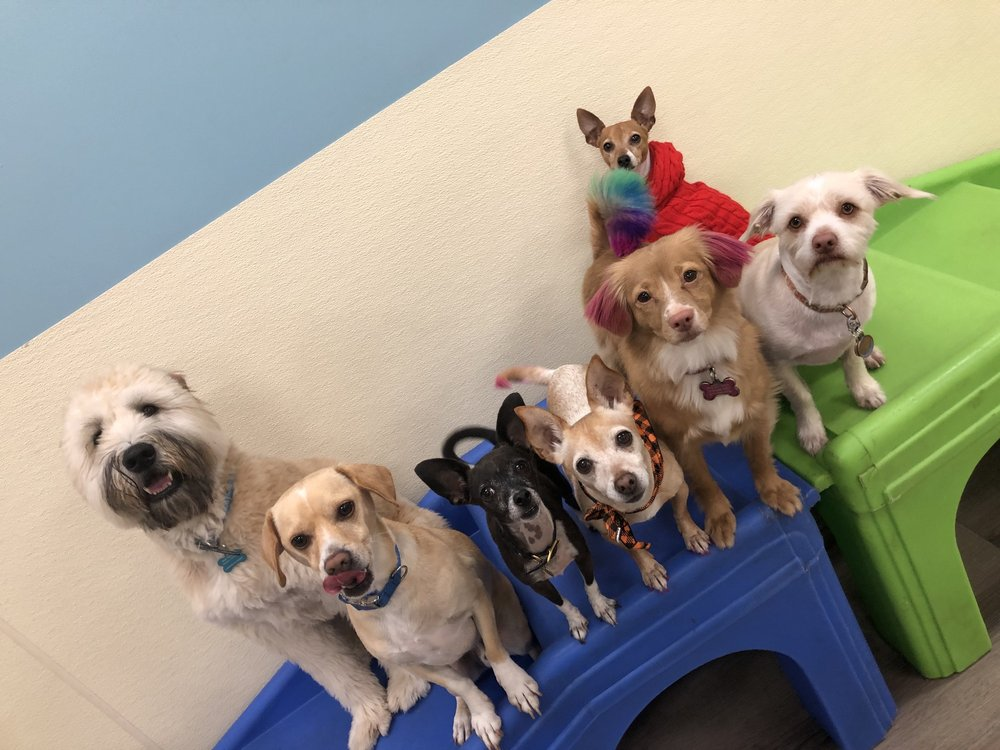 Paradise Pets Grooming and Daycare