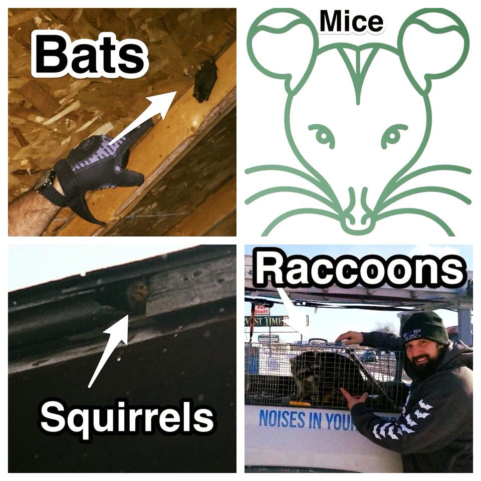 Bat Removal & Prevention: 1097 S Lapeer Rd, Oxford, MI