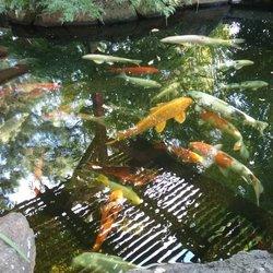 Photo Of Lakes Nursery Newcastle Ca United States Nice Koi Pond