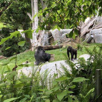 San Diego Zoo 14622 Photos 4067 Reviews Zoos 2920 Zoo Dr