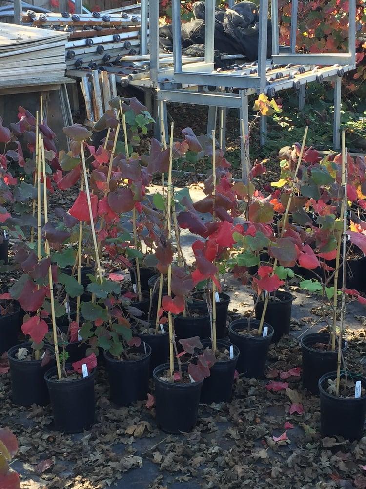California Flora Nursery 10 Reviews Nurseries Gardening 2990 Somers St Fulton Ca Phone Number Yelp