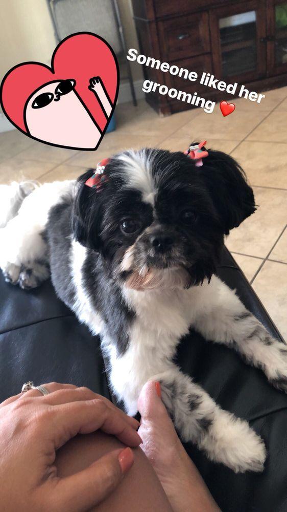 Shaggy's Mobile Dog Grooming