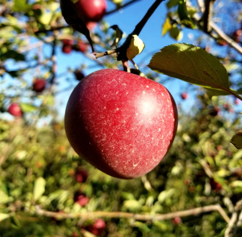 Salatin's Orchard: 10514 Chesterville Rd, Moores Hill, IN