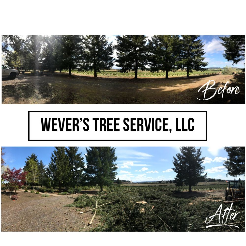 Photo Of Wever S Tree Service Estacada Or United States Fir Chop