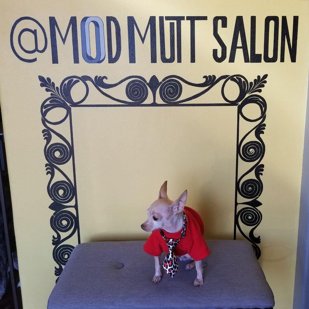 Mod Mutt Salon: 7600 N Lamar Blvd, Austin, TX