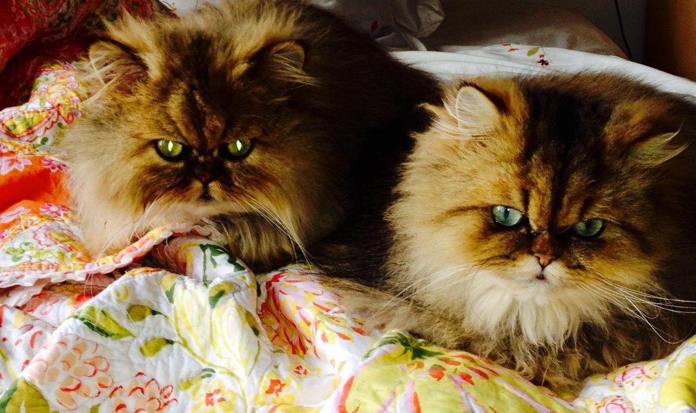 Cat Clinic: 142 Lomita Dr, Mill Valley, CA