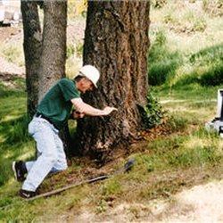 Talbot Mackenzie & Associates Consulting - Tree Services