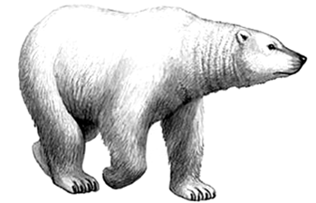 Big Bear Auction Company: 5580 M 140, Eau Claire, MI