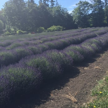 Sunshine Herb & Lavender Farm - 21 Photos & 27 Reviews - Farms ...