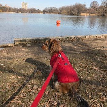Downtown Brooklyn Dog Walking