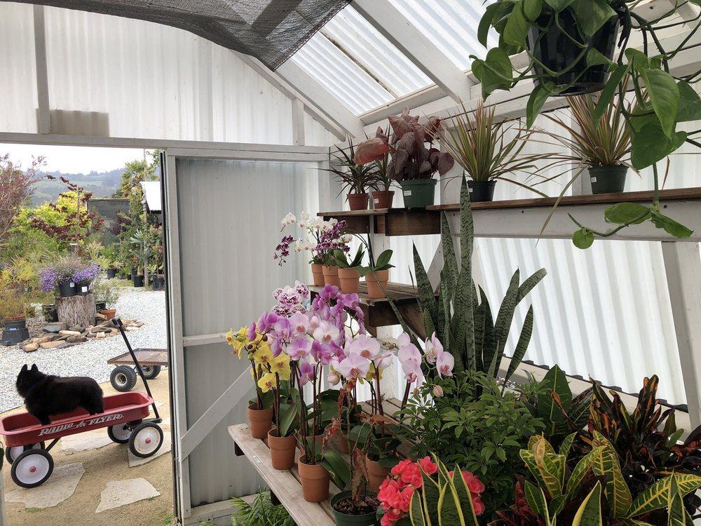 Sierra Azul Nursery & Garden