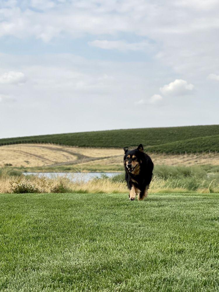 Monica's Pet Grooming: 363 Blacktail Rd, Lakeside, MT