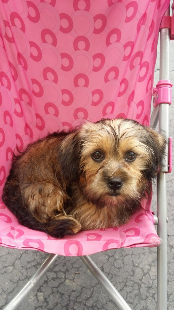 Paws & Claws Dog Grooming: 4 Hope Plz Rt 9 W, Coxsackie, NY
