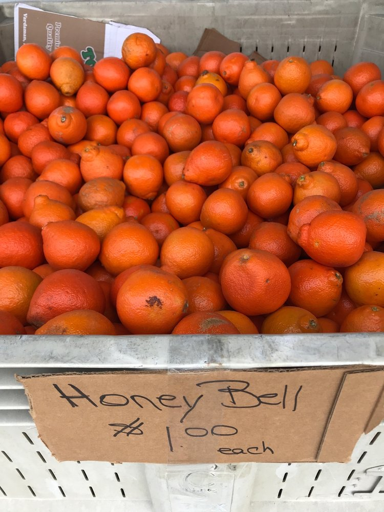 County Line Produce: 9260 State Road 207, Hastings, FL