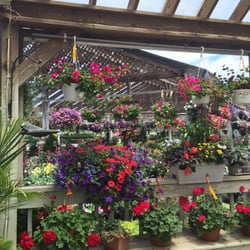 Photo Of Hollandia Nurseries Bethel Ct United States Back Here In The