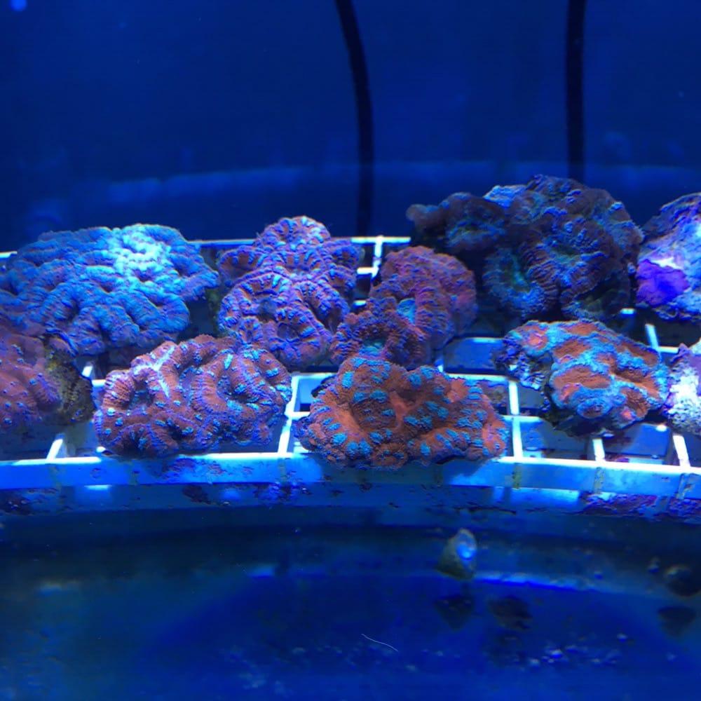 Infinity Fish: 12999 Murphy Rd, Stafford, TX