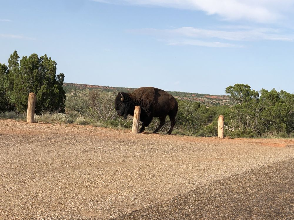 Caprock Canyons State Park: Quitaque, TX