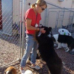 Rapid City Sd Dog Rescue