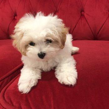 Pocket Puppies 140 Photos 184 Reviews Pet Stores 2479 N