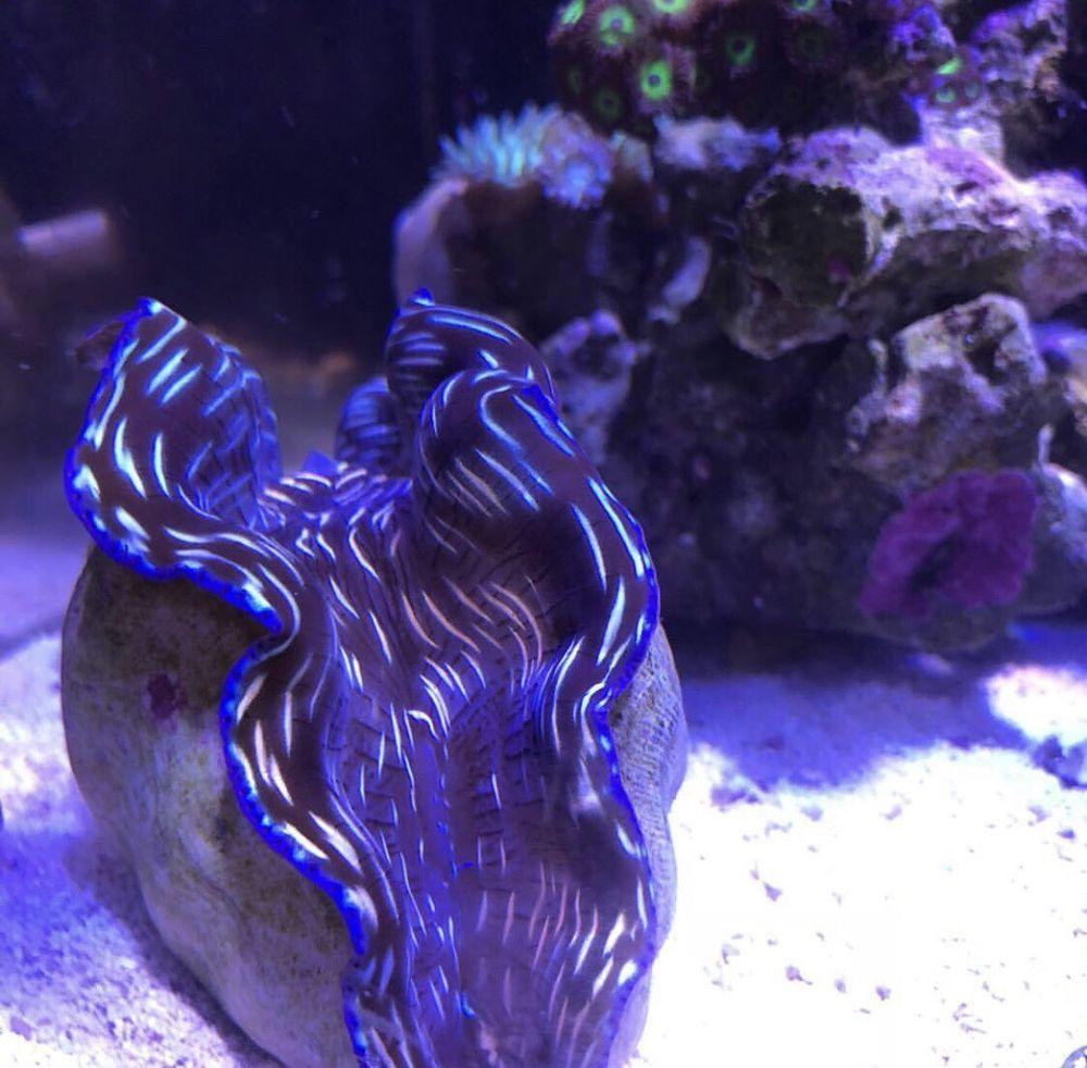Capital Aquarium: 8825 Commerce Ct, Manassas, VA