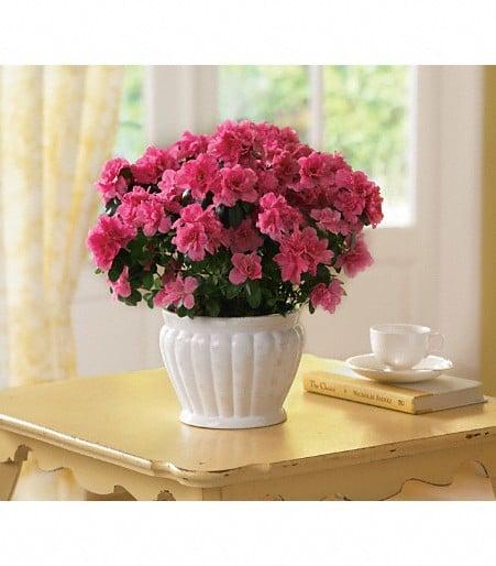 Ebie's Giftbox & Flowers: 232 S Main St, Waldron, AR