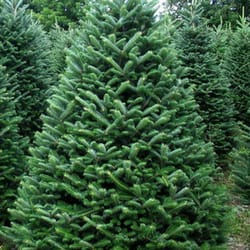 photo of hilltop christmas tree delivery valley cottage ny united states - Hilltop Christmas
