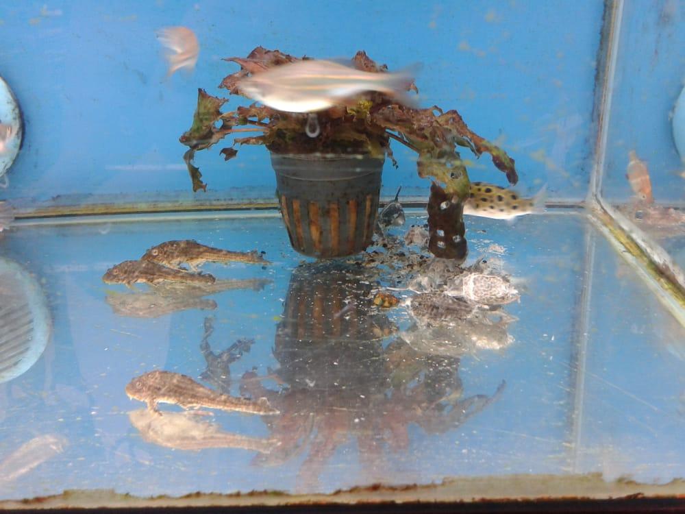 Fish tanks walmart yelp for Fish heater walmart