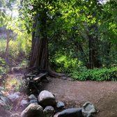 Photo Of Mildred E Mathias Botanical Garden   Los Angeles, CA, United  States.