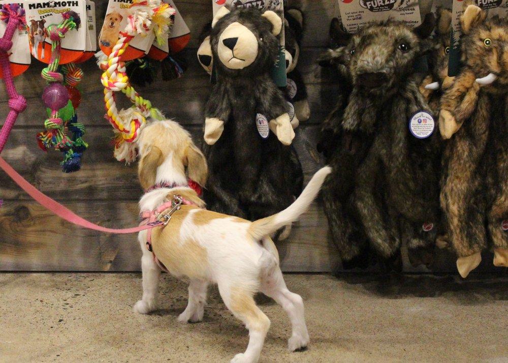 Chuck & Don's Pet Food & Supplies: 910 Wildwood Rd, Mahtomedi, MN