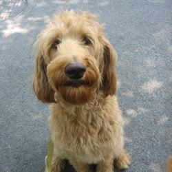 dog walker columbia md