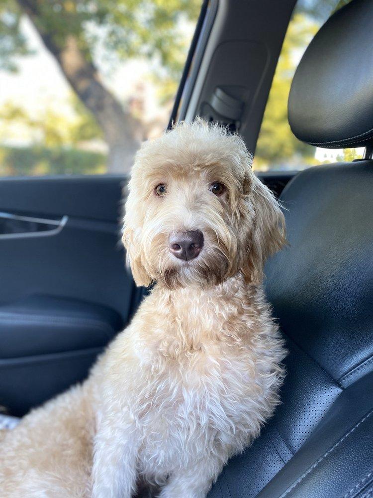 Francesca's Pet Care: Groveland, CA