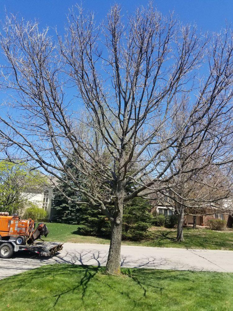 Photo of Arbor Tree Service: Attica, MI