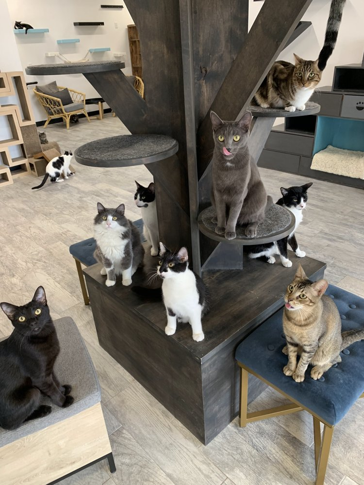 CatCafe Lounge