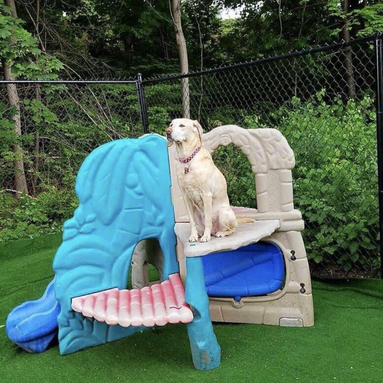 PupVille Doggy Daycare: 483 Amherst St, Nashua, NH